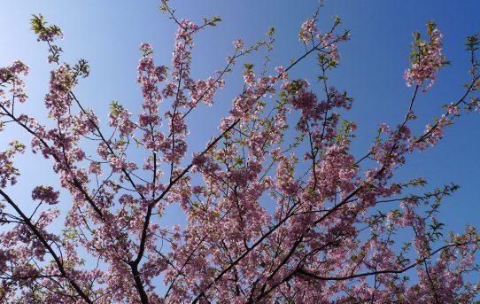 おわかれの春