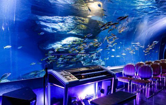 真夜中の水族館