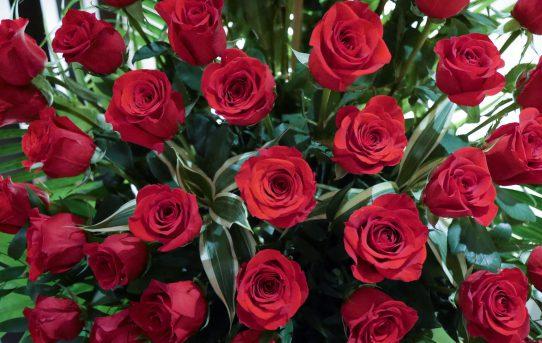 三月のバラ
