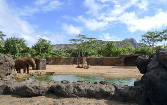 ホノルルの動物園と水族館